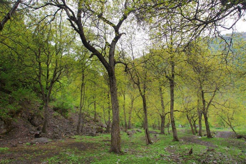 Кыргызстан полностью лишится  орехоплодных лесов, процесс уже необратим.