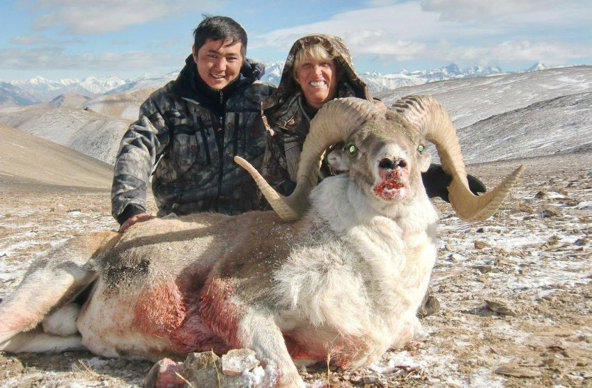 Правительство считает принятие проекта закона «О запрете охоты на некоторые виды животных в КР» нецелесообразным