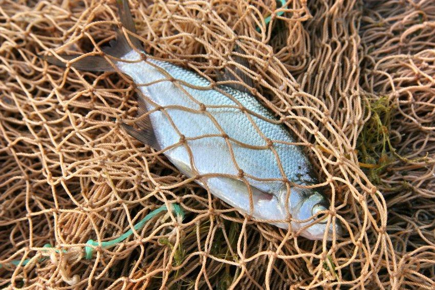 Смогут ли браконьеры спасти природу, или Как Иссык-Куль превращается в болото