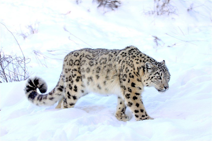 Особо охраняемые природные территории Кыргызстана