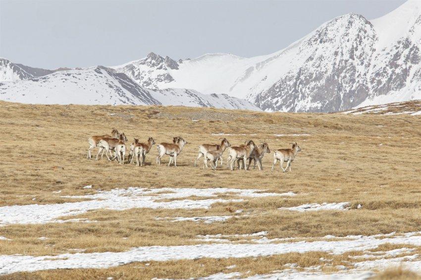 Парки и заповедники Кыргызстана