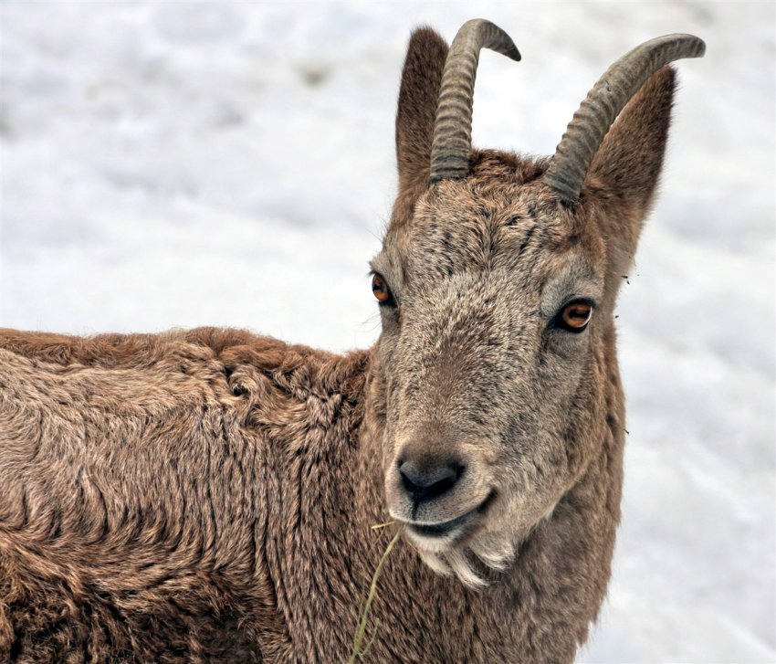 Заповедники и сохранение биоразнообразия в Кыргызстане