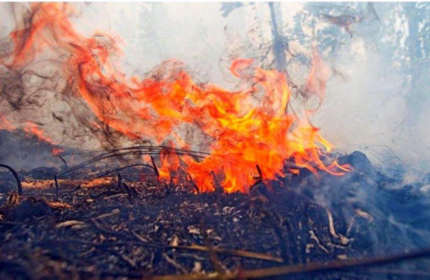 ВИДЕО . В ущельях северного берега Иссык-Куля горят леса