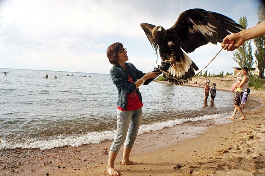 ФОТО: Завершились сроки выдачи идентификационных карт (паспортов) для ловчей хищной птицы.