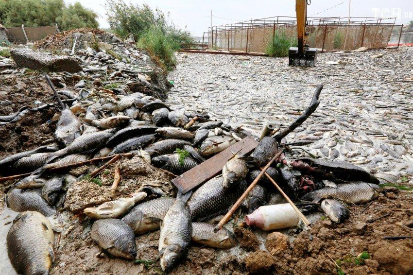 ФОТО. ВИДЕО. На третьем Ала-Арчинском водохранилище спустили воду для полива, погибла рыба