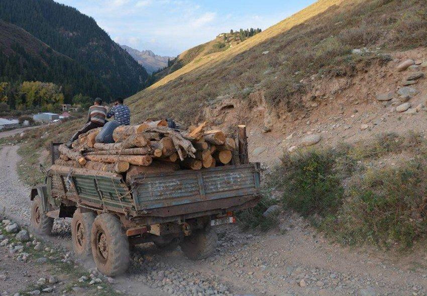 Депутат Максат Сабиров: Агентство по лесному хозяйству вместо 409 срубленных деревьев в иссык-кульских лесах в протокол внесло лишь 107