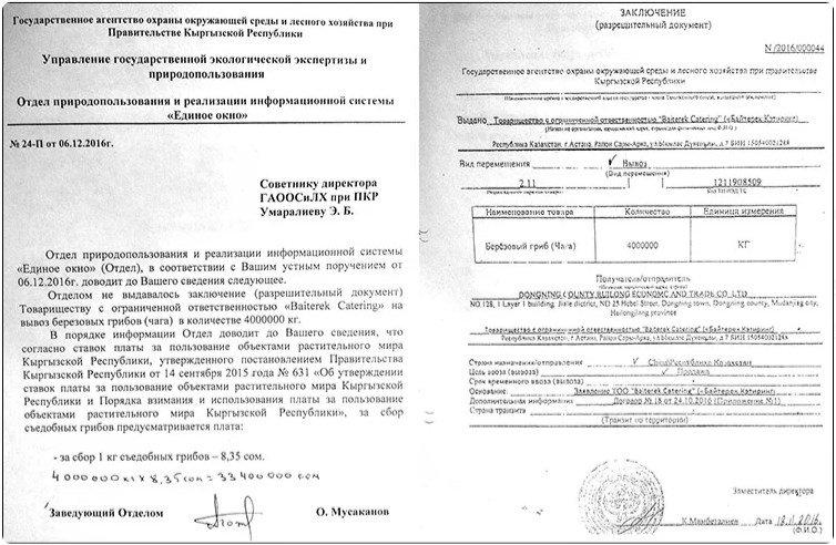 Чага высшего уровня. Как российский гриб по киргизским документам в Китай продавали