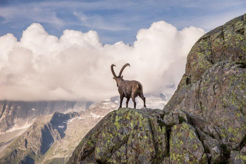 В Кыргызстане охото-хозяйственной деятельностью занимаются 52 юридических лица. Из них 42 – это частные охотничьи фирмы