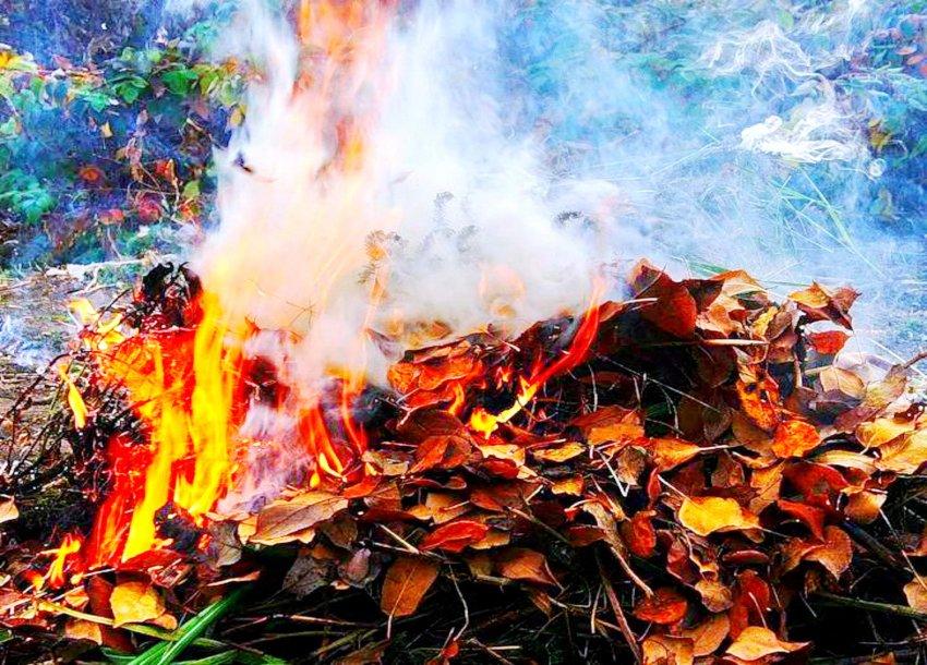 Бишкекчан, которые сжигают листья, а также топят печи резиной и мусором, будут штрафовать.