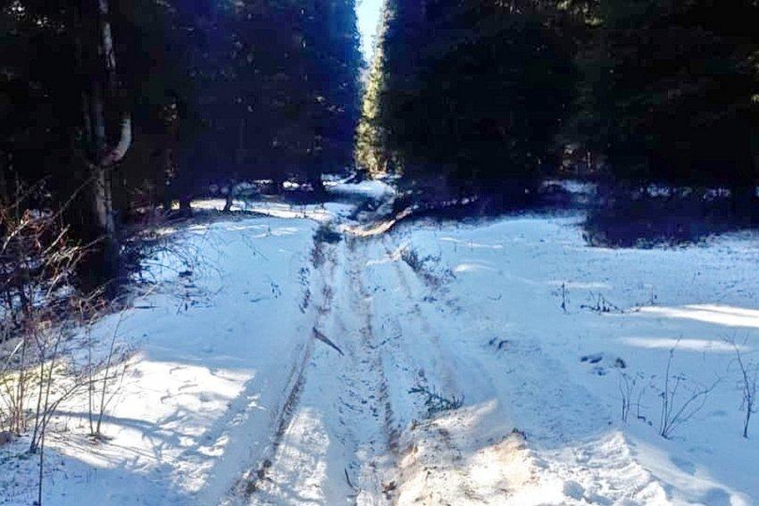 В Джети-Огузском районе Иссык-Кульской области идет массовая вырубка тянь-шаньской ели. ФОТО