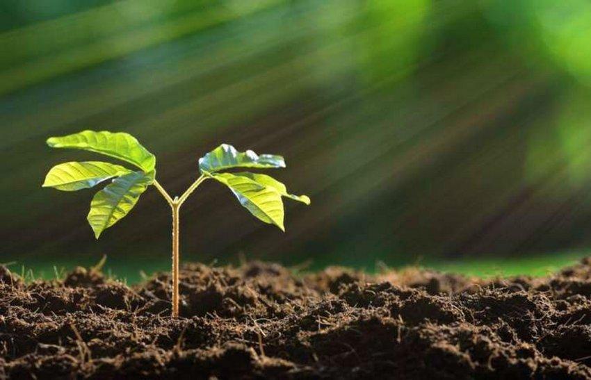 В Кыргызстане предлагают объявить 15 марта общенациональным днем посадки леса.