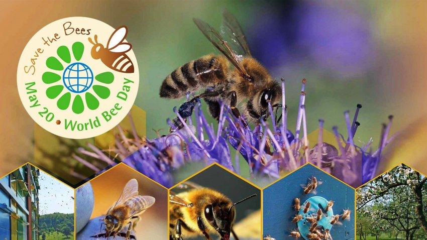 20 мая - Всемирный день пчел. World Bee Day. Кыргызстан