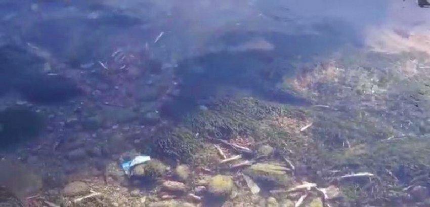 Браконьеры используют хлорку для ловли рыбы