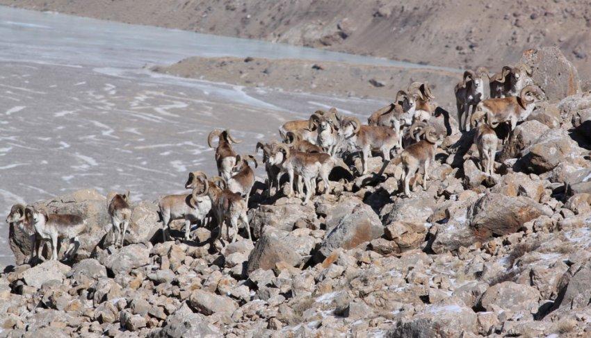 В Кыргызстане из-за коронавируса запретили весеннюю охоту.