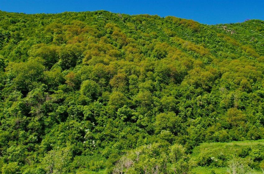 Что скрывает полог реликтового леса? Фоторепортаж