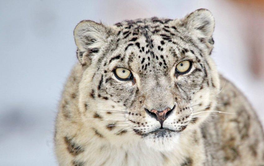 22 мая - Международный день биологического разнообразия