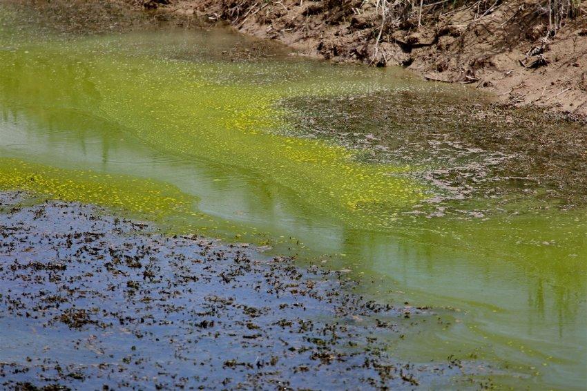 Засуха в Чуйской долине. Аномальная жара, нехватка воды и экоцид. ФОТОРЕПОРТАЖ.